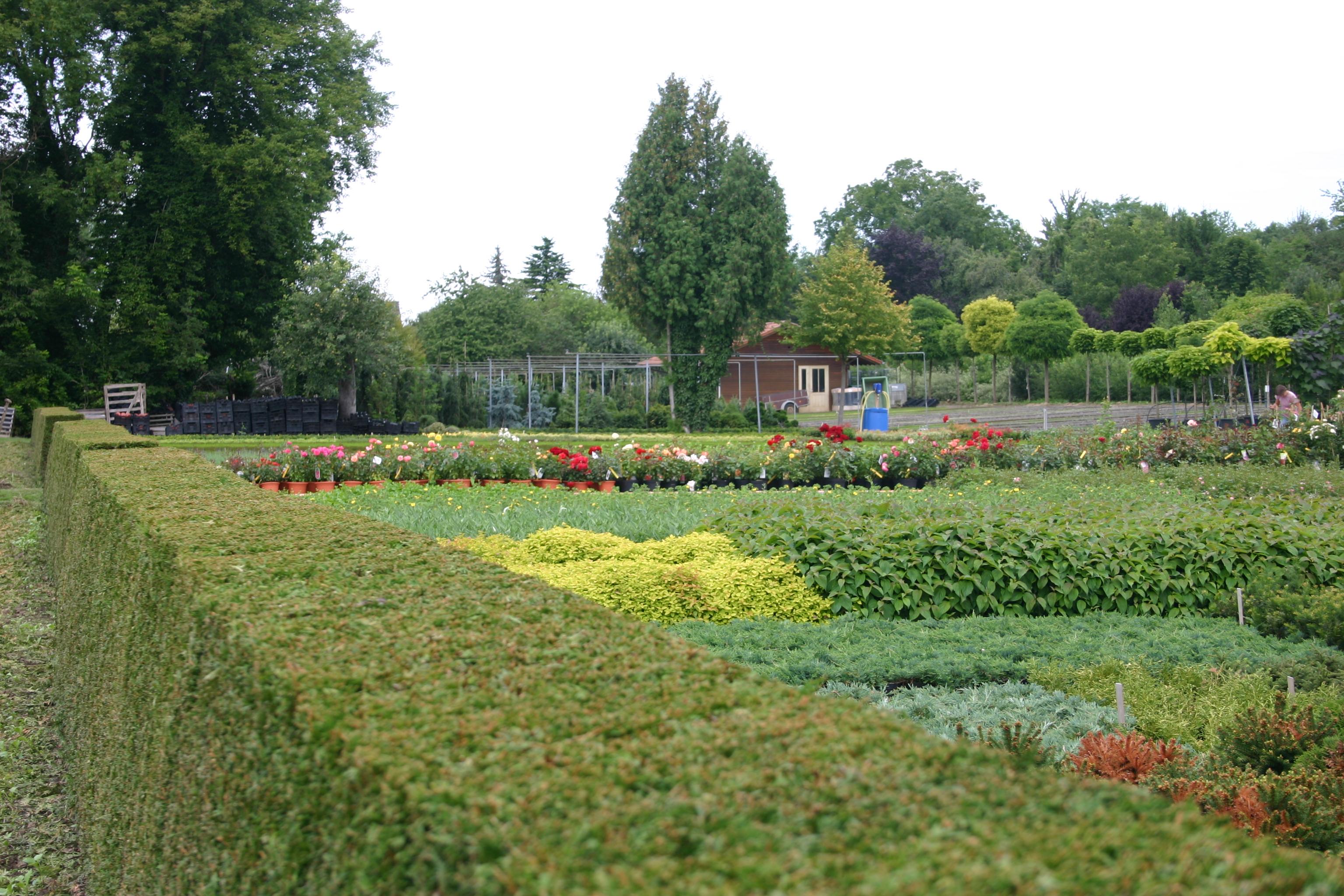 Heckenpflanzen und Flächengrün